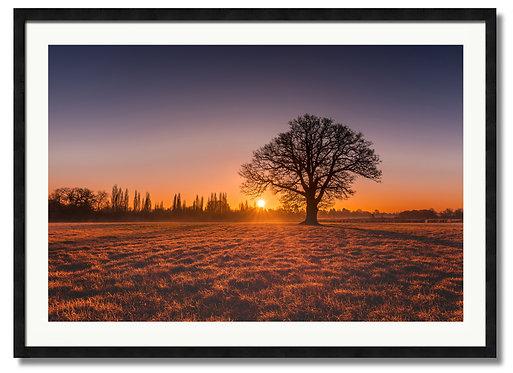 Epsom Sunrise - (Code 00240)