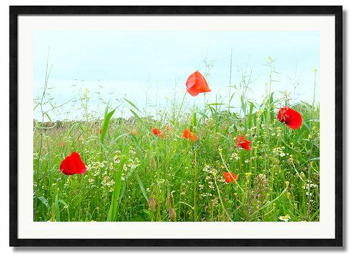 Fields of Hope - (Code 000013)