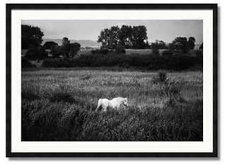 black and white wall art of white horse in a meadow sussex