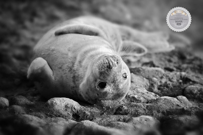 Seal Having a Rest