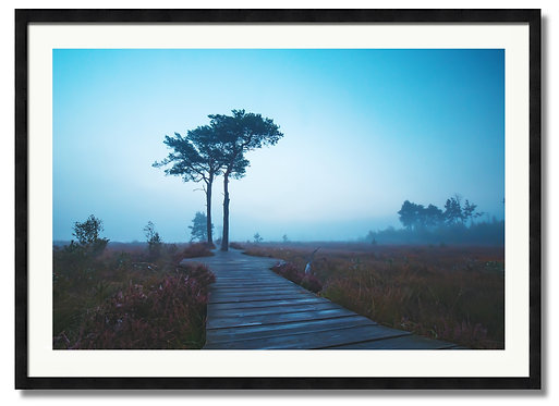 Misty Blue - (Code 000178)