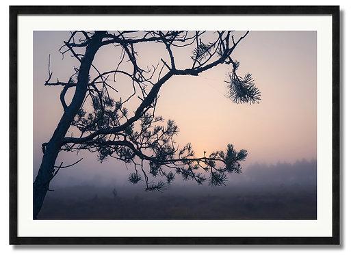 Misty Dawn - (Code 000036)