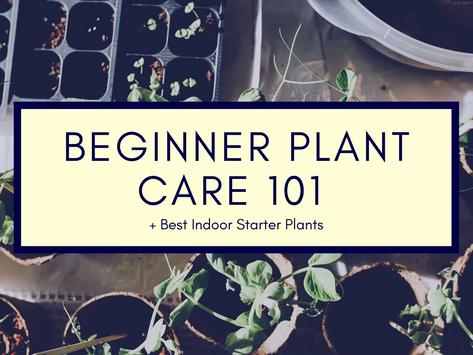 Beginner Plant Care 101 + Best Indoor Starter Plants