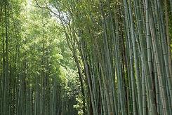 Arashiyama-Bamboo-Forest-Kyoto.jpg