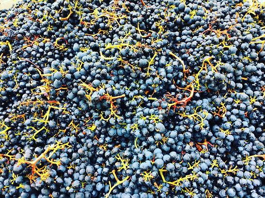 Image of Malbec Grapes