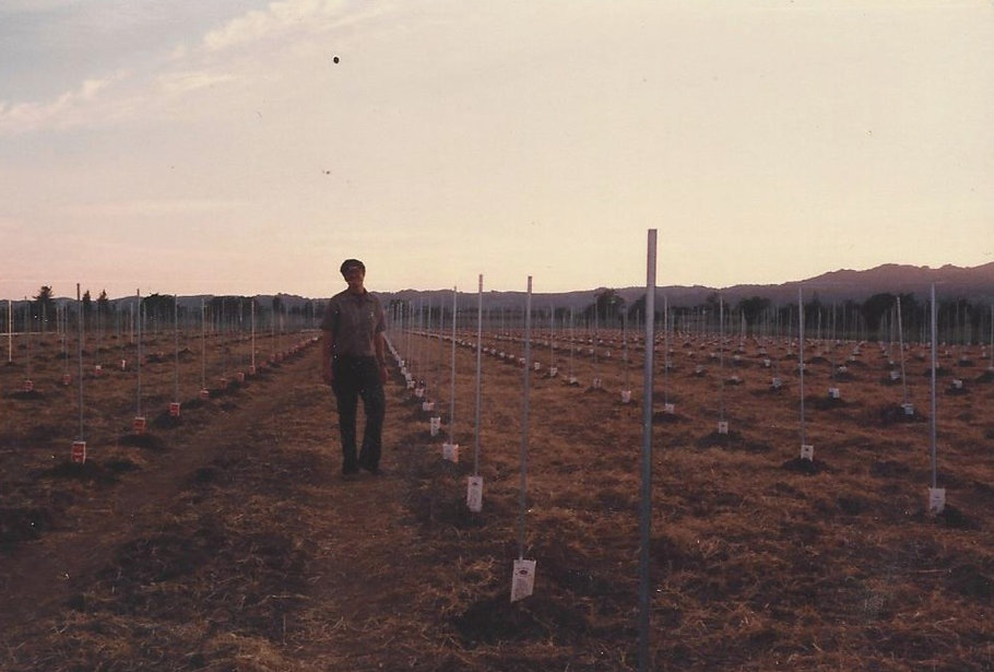 Image of Bob Mueller stainding in the Mckenzie-Mueller Vineyard