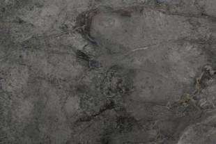 MIRUI050-marmol-ruivina