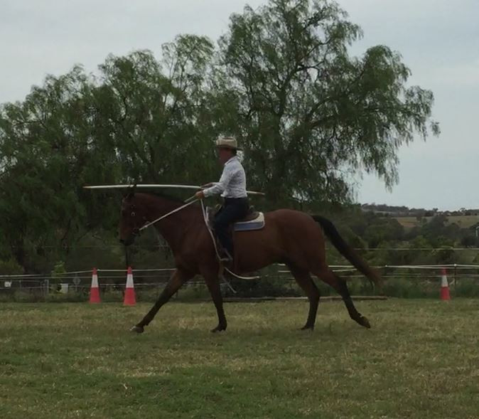Pam attending a working equitation clinic.