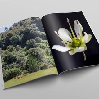book .jpg