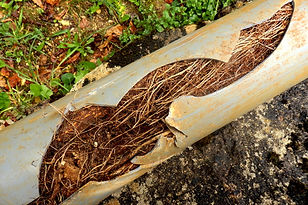 We are experienced in clearing tree roots in drains..