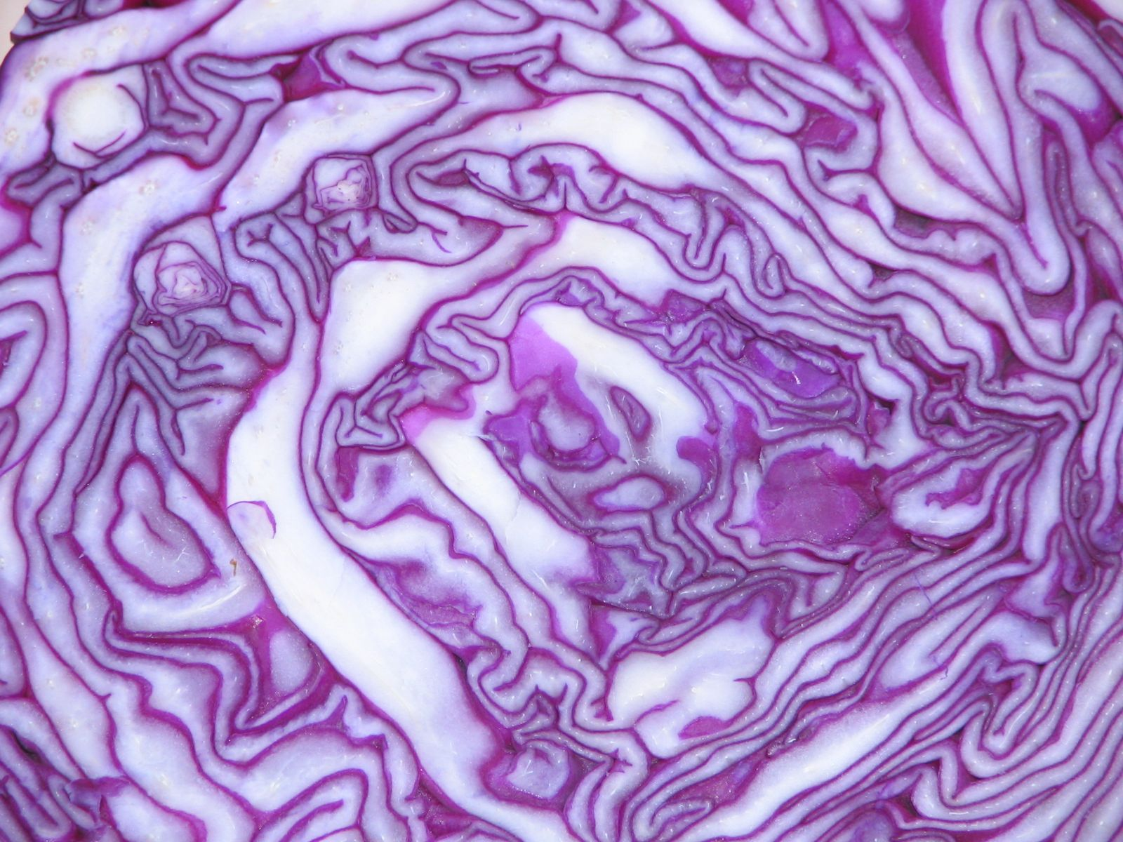 Red Cabbage4.jpg