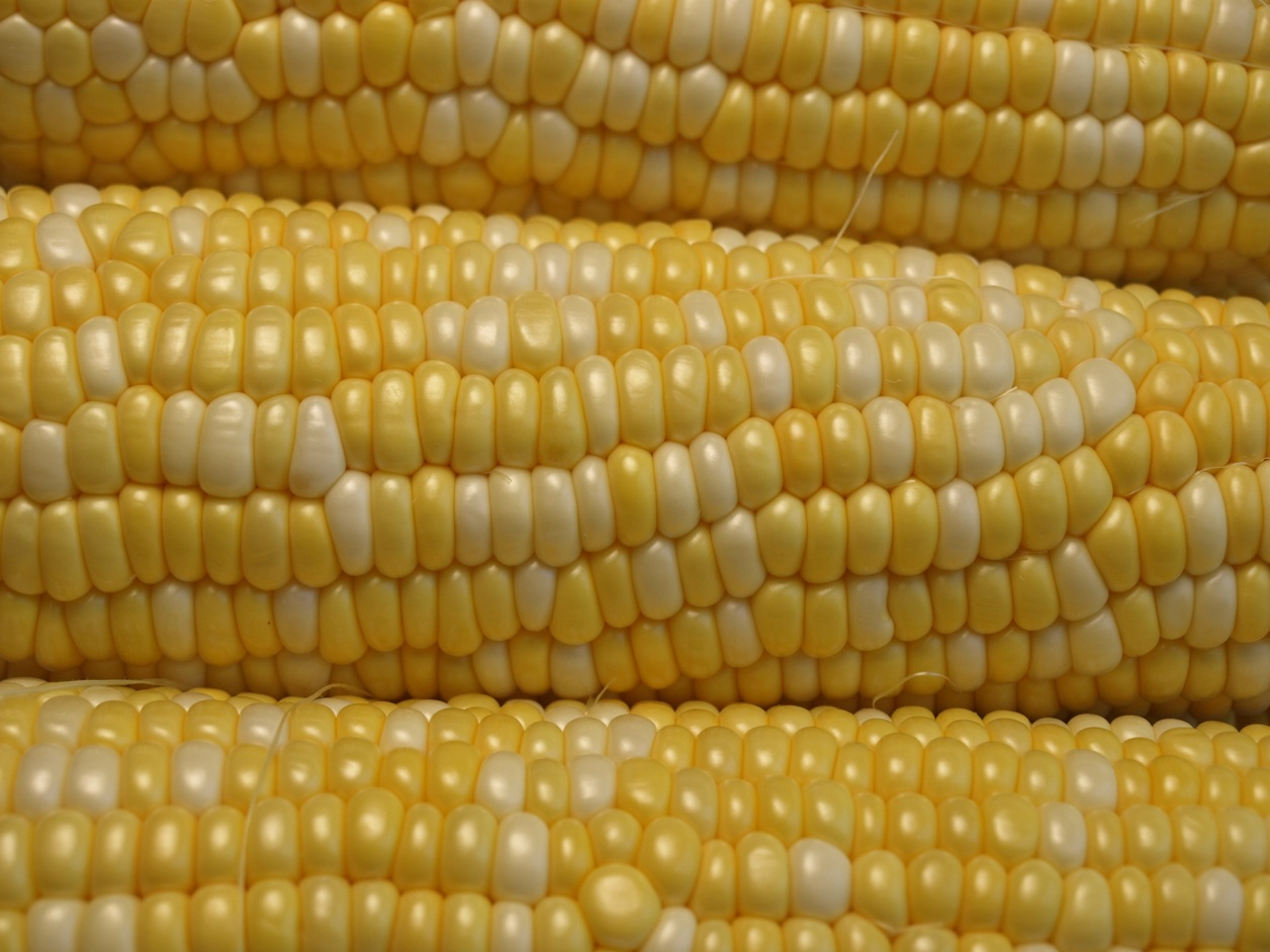 original_sweet corn web1.jpg
