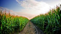 from-a-kansas-wheat-field.jpg