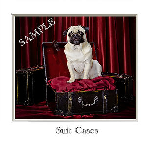 Suit Cases Sample.jpg