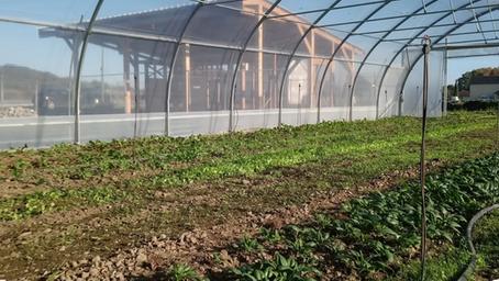 Pau veut installer 100 fermes maraîchères bio