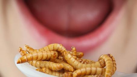 Des insectes dans l'assiette des enfants à la cantine ?