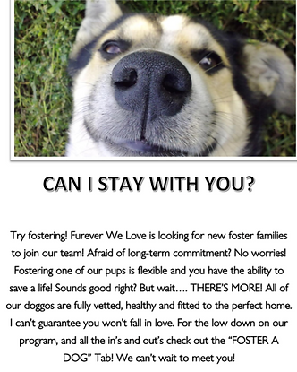 fosterflyer1.png
