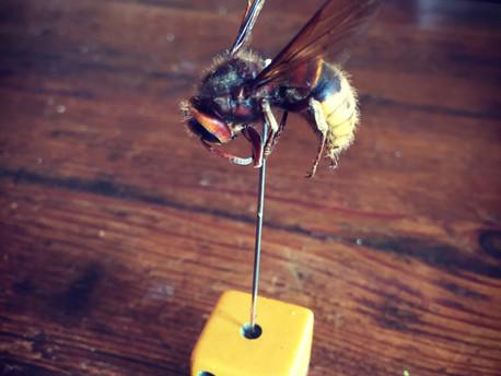 Monologue: I am a Pollinator.