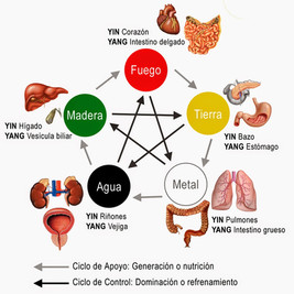 medicina_china_organos.jpg