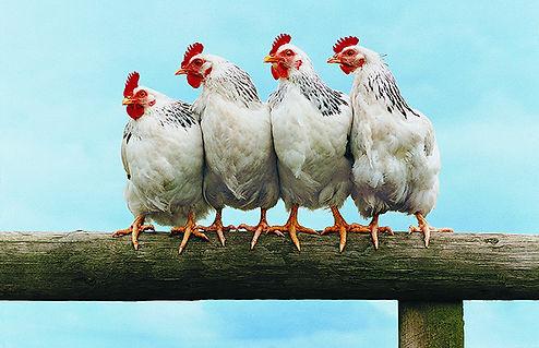 Produtos para aves site Natural Kingdom