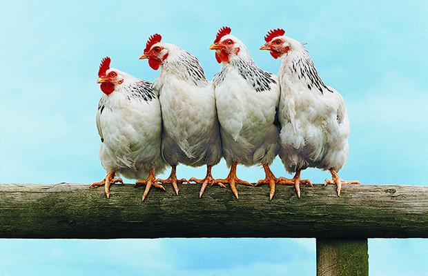 National Chicken Dance Day