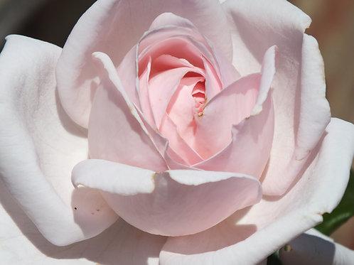 Pretty Parfuma