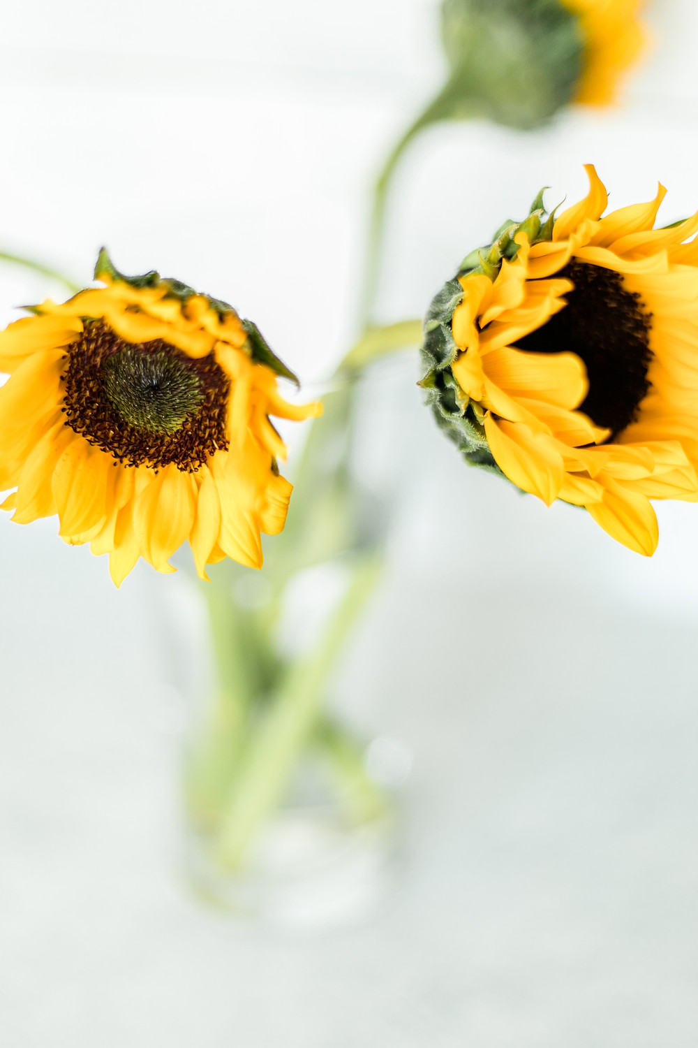 Light and Airy sunflowers in a vase.