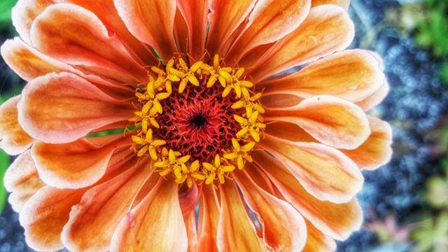 Flowers upon flowers.jpg
