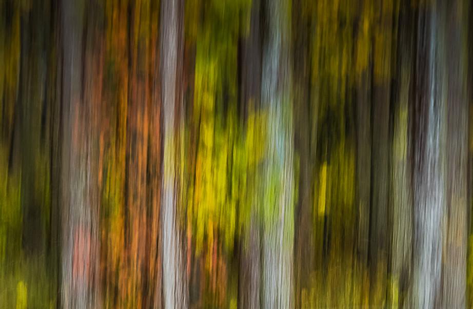 Impressions of Fall 11x17.jpg