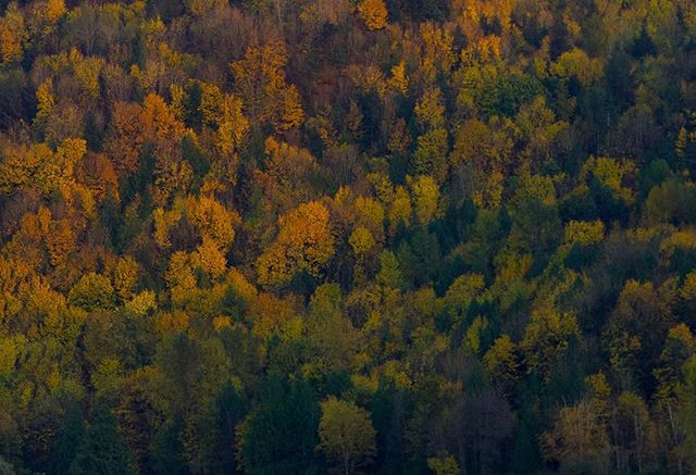 The edge of Autumn.jpg