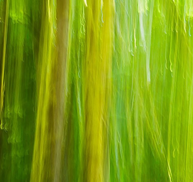 Rain Forest, Stimpson Nature Preserve.jp