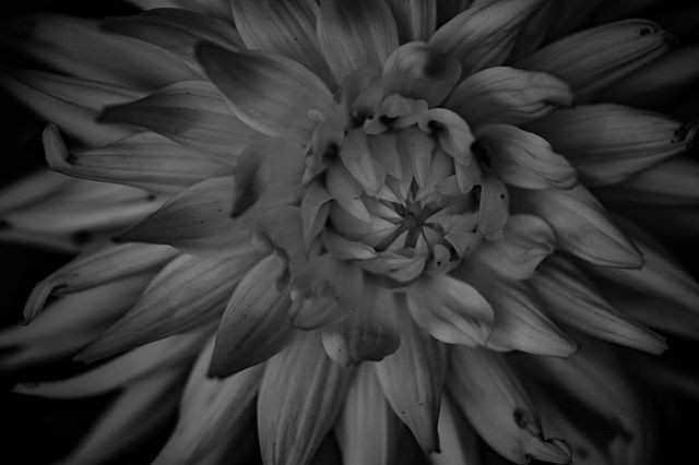 Several shades of gray.jpg