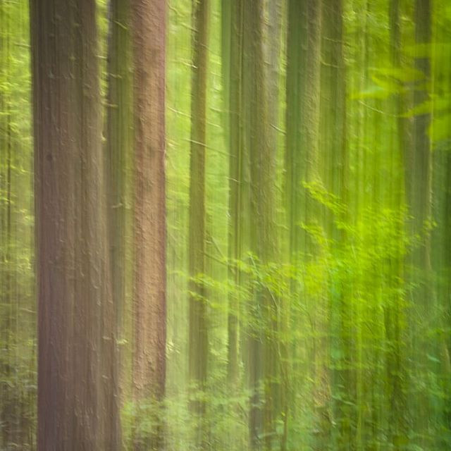 Another pic using ICM, a little faster s