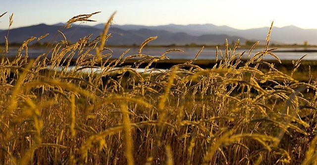 Ninepipes sunset.jpg