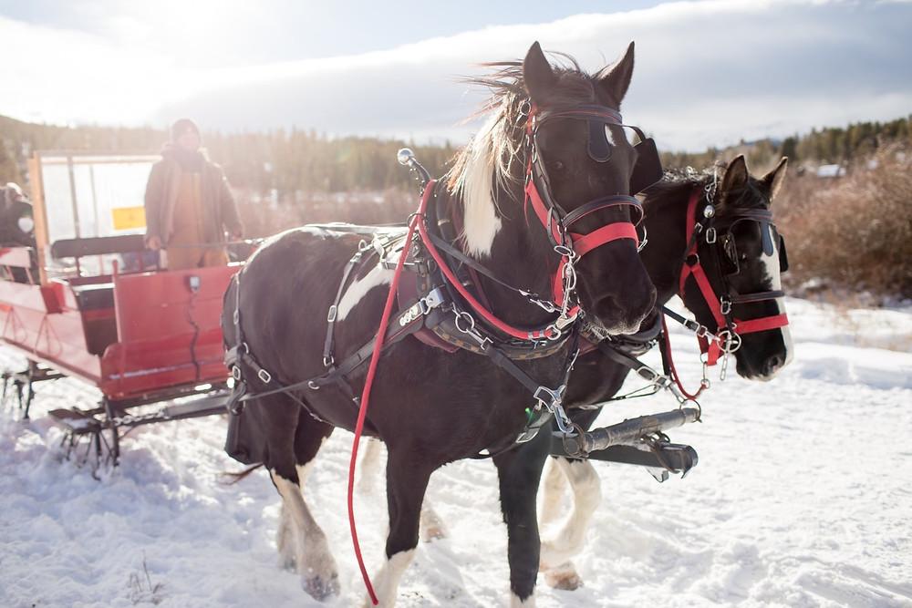Horse Sledding