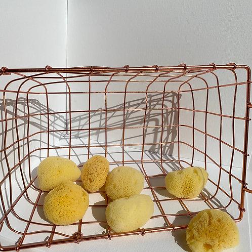 Exfoliating Sea Sponge