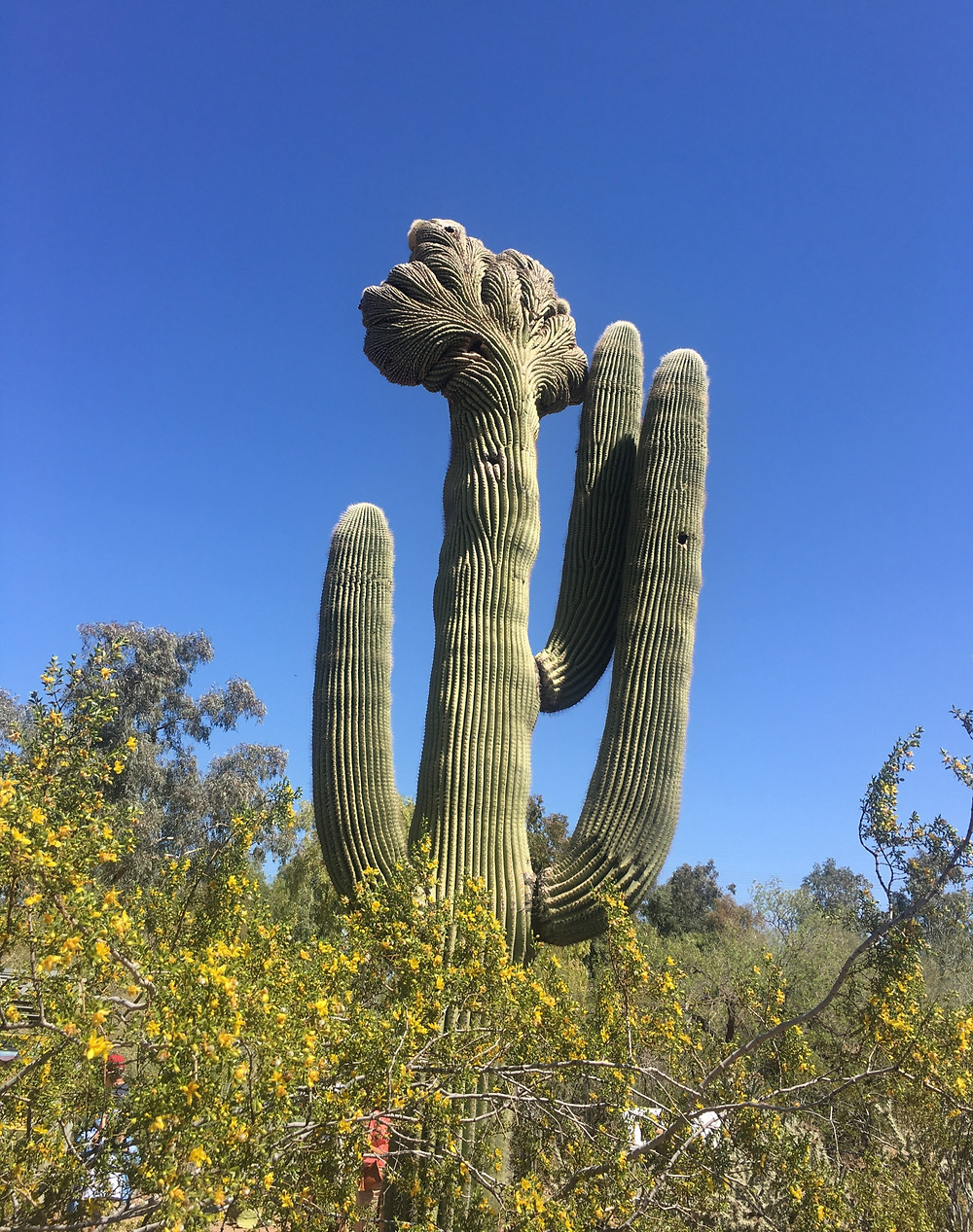 Saguaro National Park Tucson Arizona