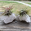 Thumbnail: Air Plant on Crystal to enliven your decor