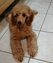 Monty-5 Monate-4.jpg