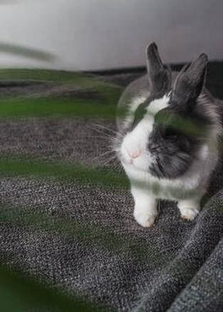 bad-photo-rabbit.jpg