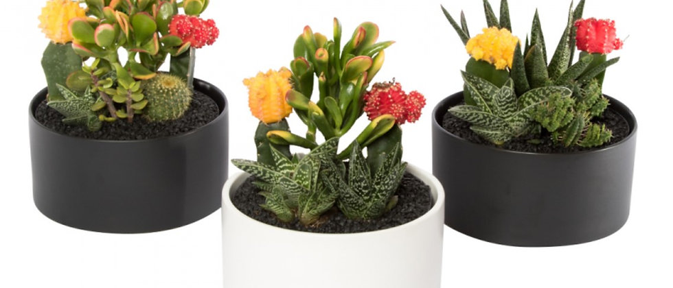 Cactus Garden Ceramic Cylinder Bowl