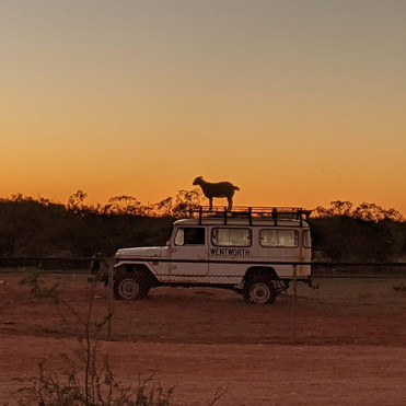 the outback with LHD Nursing Agency (5).