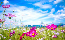 flowers and nature.jpg