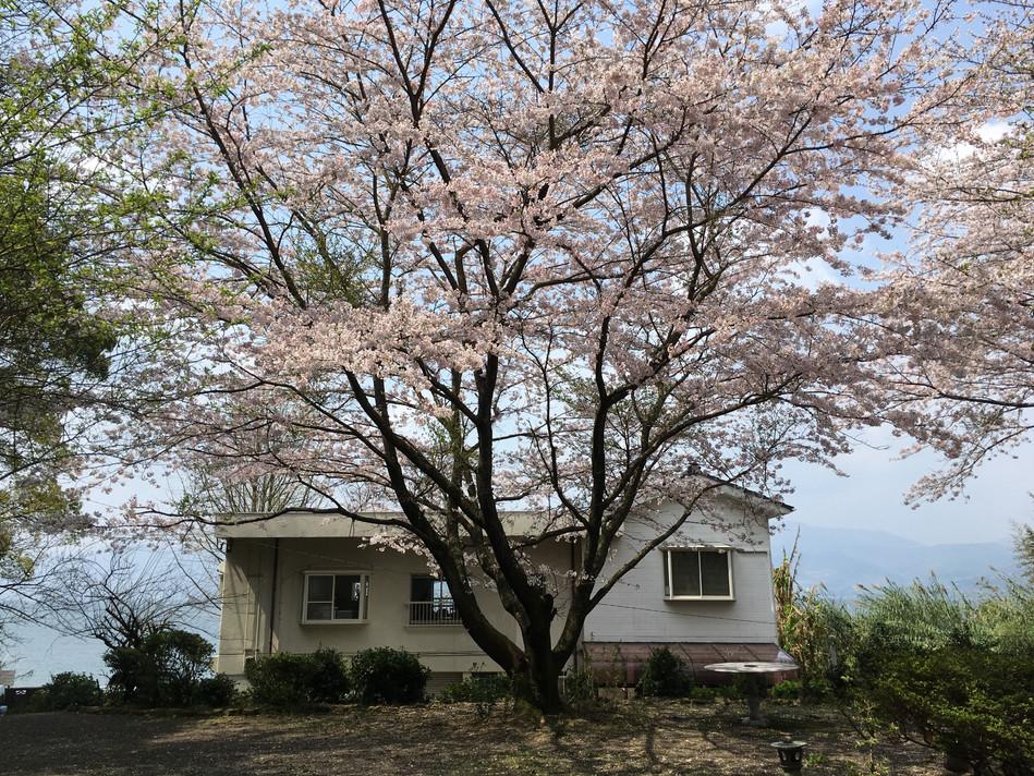 桜&SBG