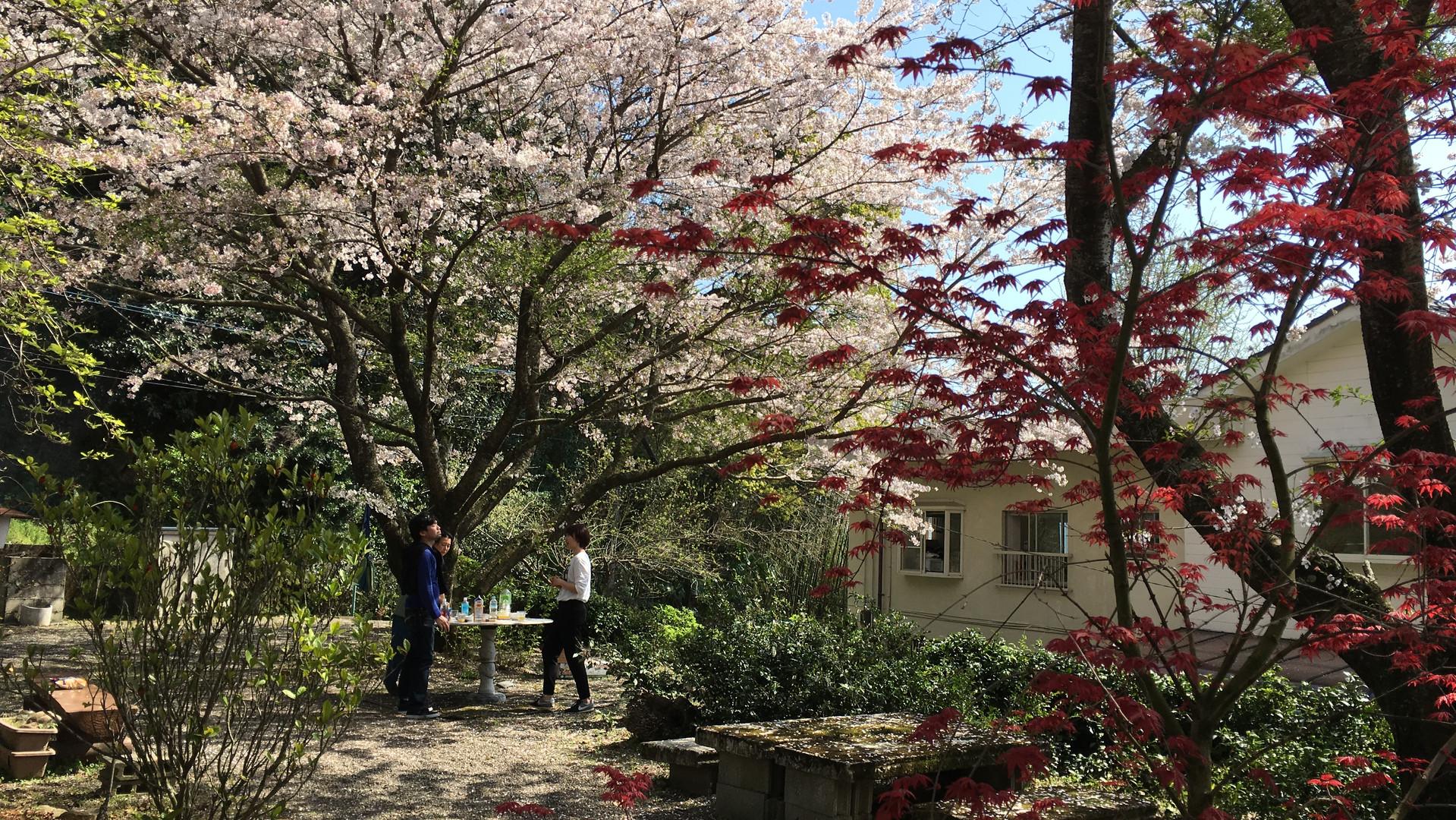 桜&もみじ