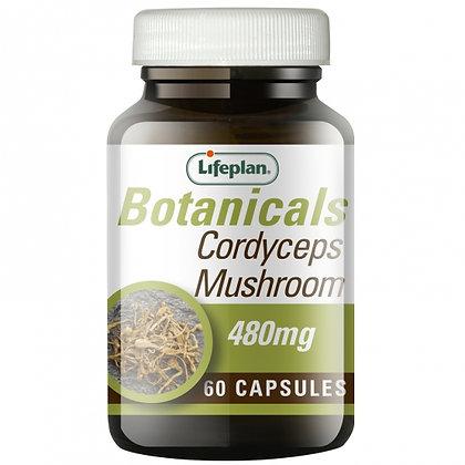 Lifeplan Cordyceps Mushroom 60 Capsules
