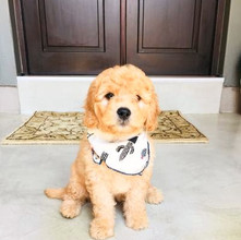 Is Your Family Ready For a Pet (Puppy in my case)?