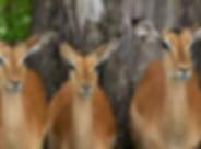 Impala20111212_0404.jpg
