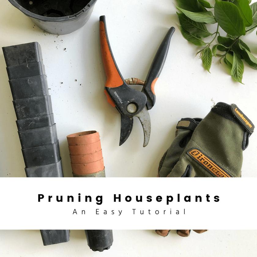Pruning houseplants: An Easy Tutorial
