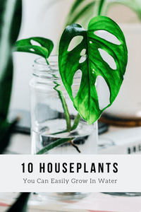 10 Houseplants You Can Easily Grow In Water